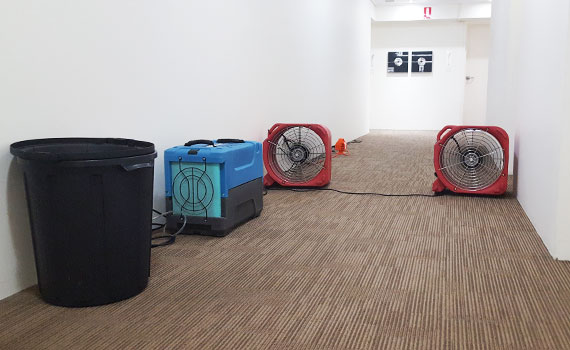Carpet Cleaning Tweed Coast | Water Damage | Crikey Cleaner Services